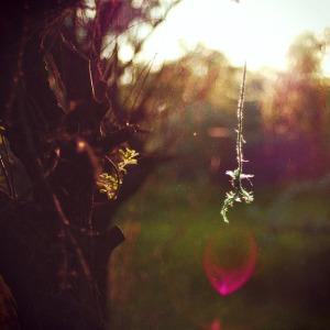 Fairy-Magic-3568160176_bb1cbed8a1_z